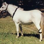 hobbled-horse